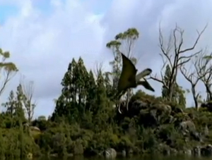 Dwarf pteranodon