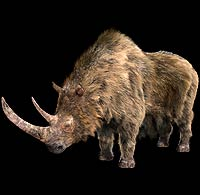 File:Woolly rhino 1.jpg