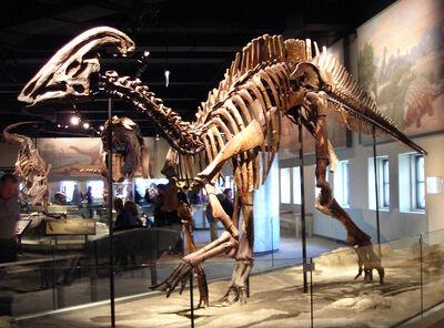 800px-Parasaurolophus cyrtocristatus
