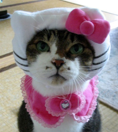 File:Hello-kitty-cat.jpg