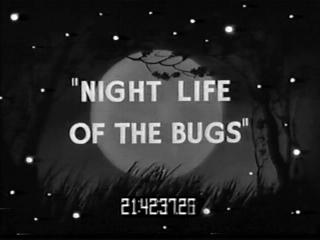 Nightlife-title