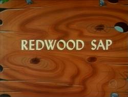 Redwood Sap