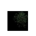 Tree8.v2.png