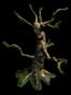 Historical-Tree-2