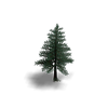 Tree5.v2.png