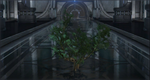 CBPruned Bush.png