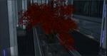 CBspringmapletree.png