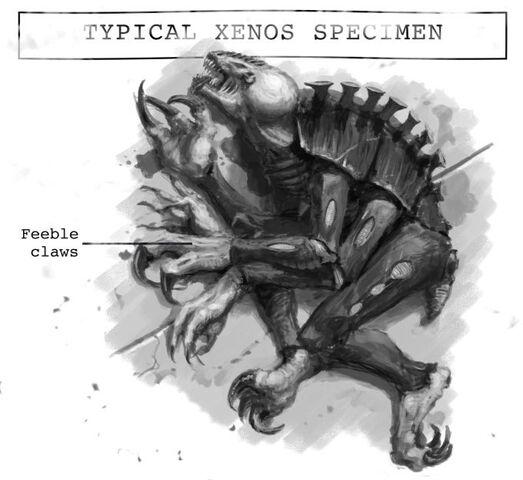 File:Xenos-specimen.jpg