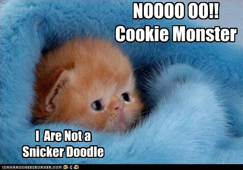 File:Funny-pictures-kitten-is-not-a-cookie.jpg