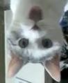 File:OMG Cat.jpg