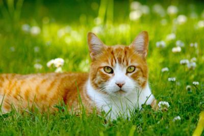 File:400px-Cat in grass.jpg