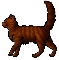 File:Tigerstar.apprentice.png