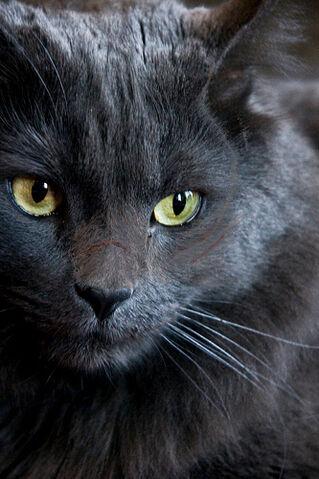 File:Crystal Cat.jpg
