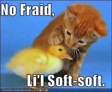 File:Funny-pictures-kitten-comforts-chick large.jpg
