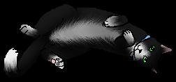 Cosmo.kittypet