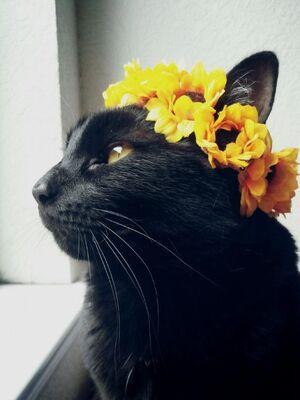 Ivyflower.life