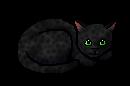 Leopardkit.kit