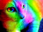 Rainbowswirl
