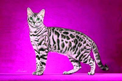 Bengal-cat-ss4