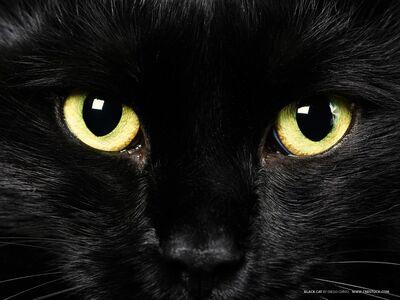 Cat-pictures-black-cat-577