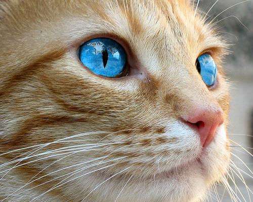 Warrior Cats Dark Forest Realistic Cat Pics