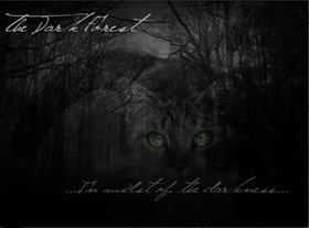 Dark forest place of no stars