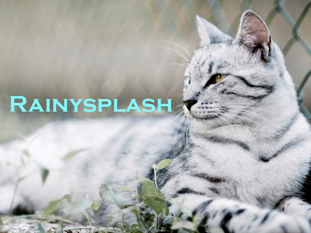 File:Rainysplash.png
