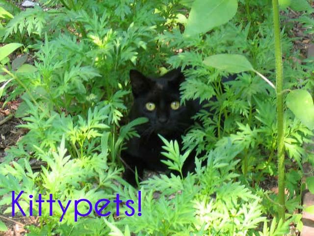 File:Kittypets.jpeg