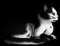 Thumbnail for version as of 01:37, November 14, 2014