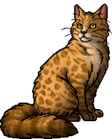 Leopardstar.warrior