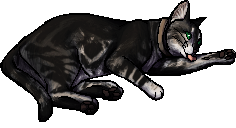 Pasha.kittypet