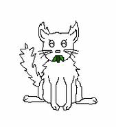 Cat-Blank-29