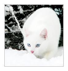 Snowpaw of SnowClan