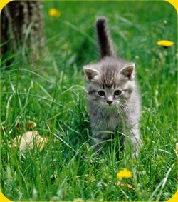Cute-kitten-picture-in-the-grass