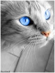 Sapphireshine