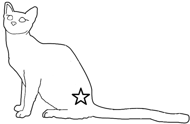 File:Warrior She Cat.png