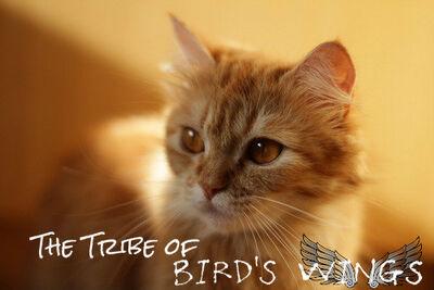 Tribeofbirdswings