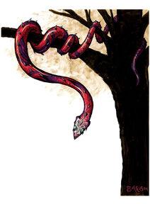 Jaculus snake