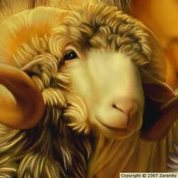 Golden Ram-1-