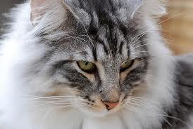 File:C.R.T.W. Cat.jpg