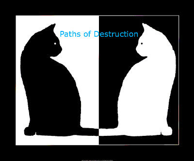 Black and white cats-1541