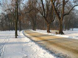 Park Skaryszewski zima.JPG