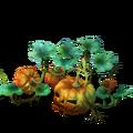 Pumpkin Plant Ripe