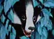Watership Down Badger
