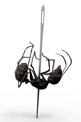 File:Dead ant.jpg
