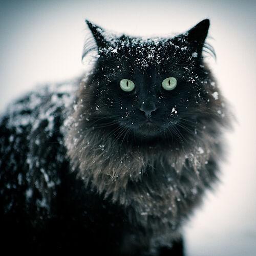 Wolfkit