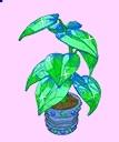 Sparkle Plant