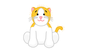 Gold and White Cat