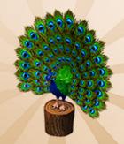 Peacock Pedestal