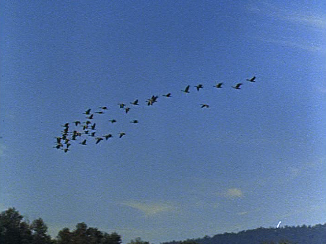 File:Shane - The Wild Geese - Image 1.png